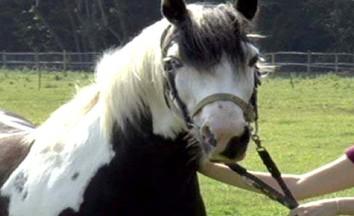 portada caballo